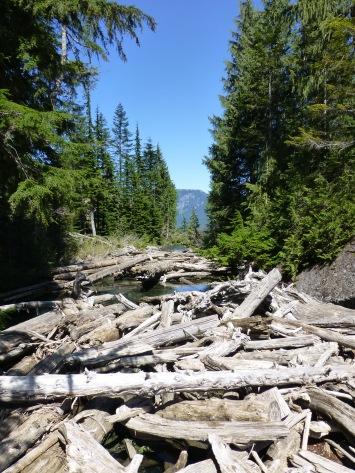 Log jam at the head of Lake Serene