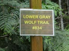 Lower Gray Wolf