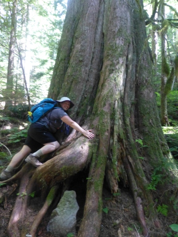 Goat Lake Trail Tree hugger