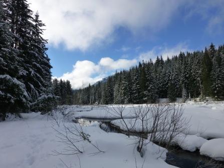 Gold Creek Pond
